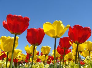 pictures-of-spring-flowers-2